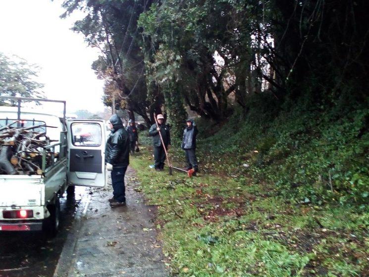 En Pucón trabajan en la poda de lugares públicos para la seguridad de los vecinos